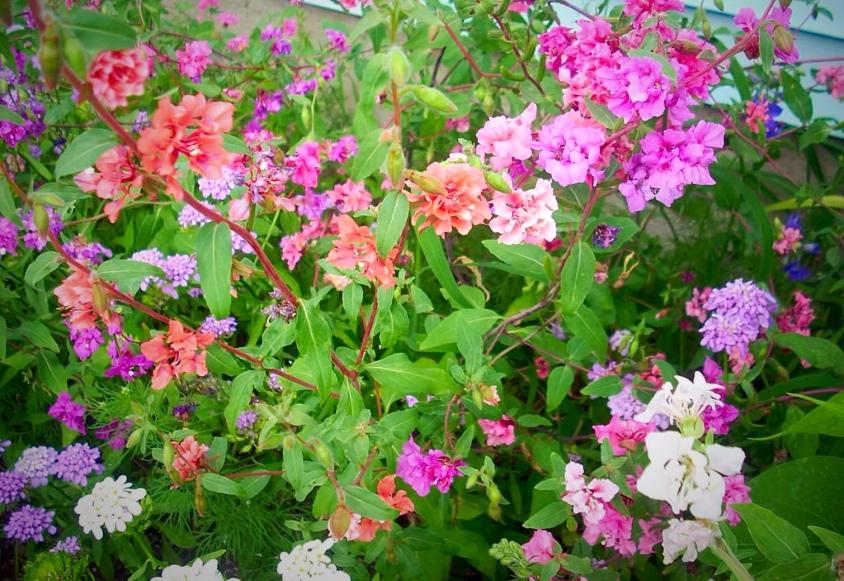 Indiana Wildflowers